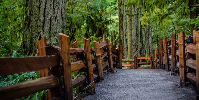 Old Growth on Vancouver Island